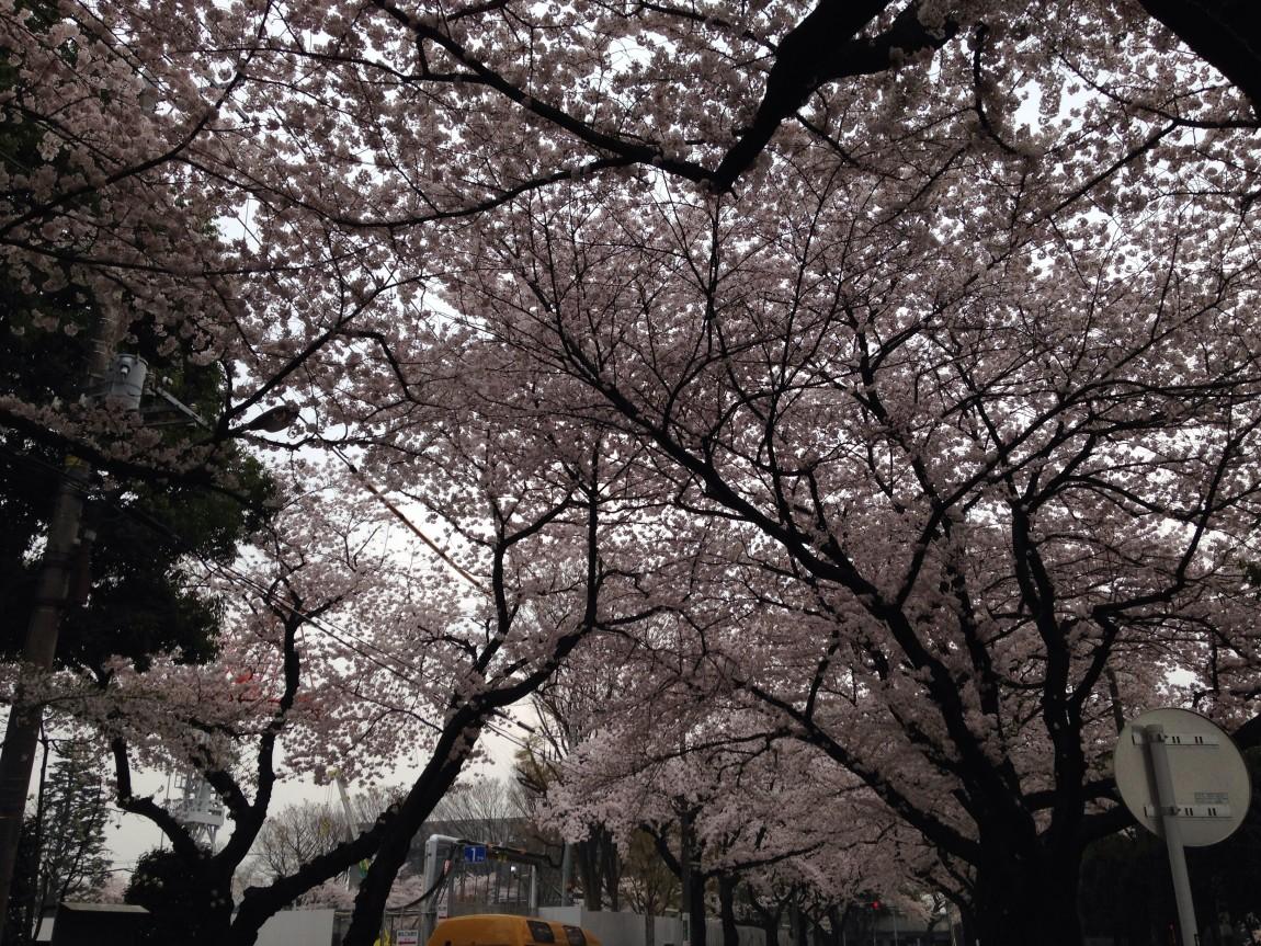 お花見&外食in吉祥寺