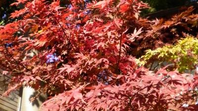 秋の深大寺へ
