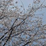 お花見ドライブ♪in新小金井事業所